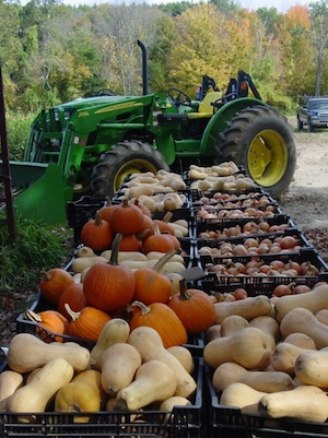 photo of butternut squash, pumpkin, onions, and a tractor at the Garlic Farm, during the last week of the 2013 season
